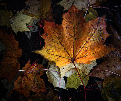 Fall Color Series II by Joanne Coyle
