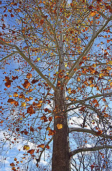 Fall-colored tree almost leafless by Eneida Gastal-Keith