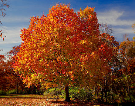 Fall Colors-01 by Larry Jost