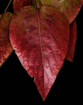 Fall Colors 3 by James Sage