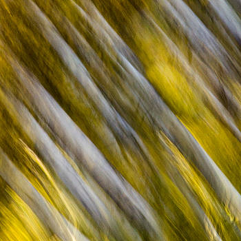 James Woody - Fall Colors Abstract
