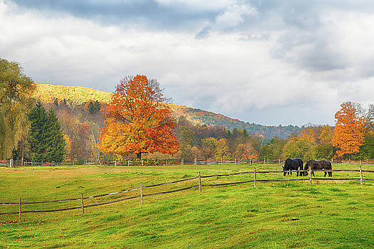 Fall colors after the storm. by Jeff Folger