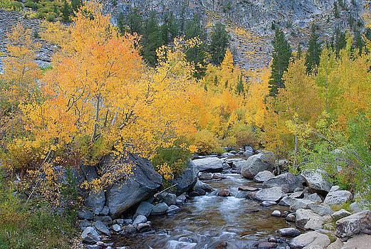 Fall Colors and Cascading Stream by Ram Vasudev