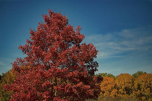 Fall Colors, Ashville, NC by Richard Goldman