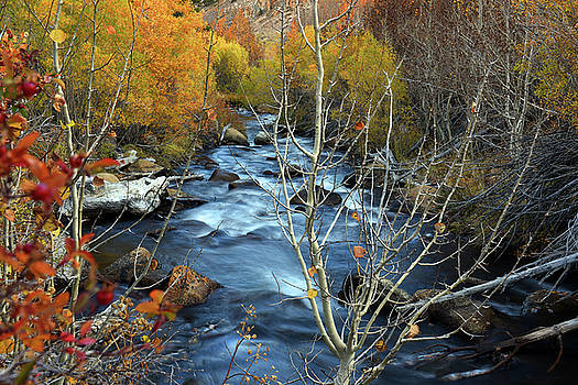 Fall Colors Bishop Creek by Dung Ma