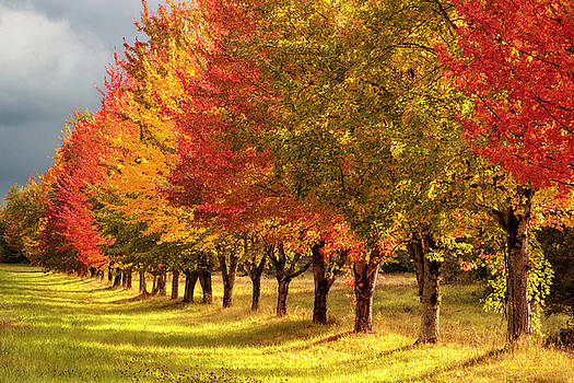 Fall colors by Hans Franchesco