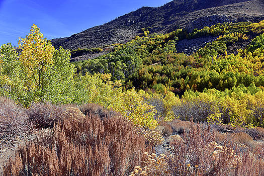 Fall Colors In Bishop Creek  by Dung Ma
