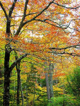 Jonathan Hansen - Fall Colors in Maine 1