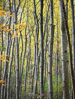 Jonathan Hansen - Fall Colors in Maine 2