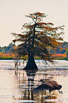 Fall colors in the marsh by Bill Perry