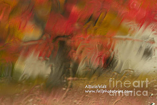 Fall Colors in the Rain by April Bielefeldt