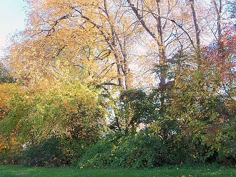 Fall Colors by Landon Hughes