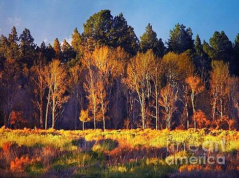 Fall Colors Lone Cone area Colorado by Annie Gibbons