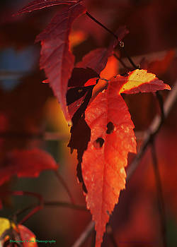 Fall Colors by Michelle Hoffmann