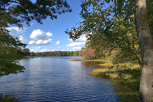 Fall Colors by Nena Pratt