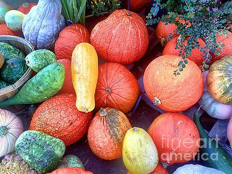 Edward Sobuta - Fall Colors Pumpkins and Gords 6