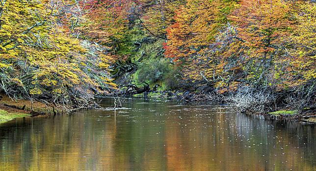 Max Waugh - Fall Colors Reflected