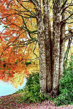 Dan Carmichael - Fall Colors Reflecting in a Blue Ridge Lake AP