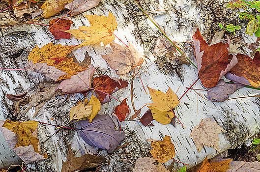 Fall Colors by Thomas Pettengill