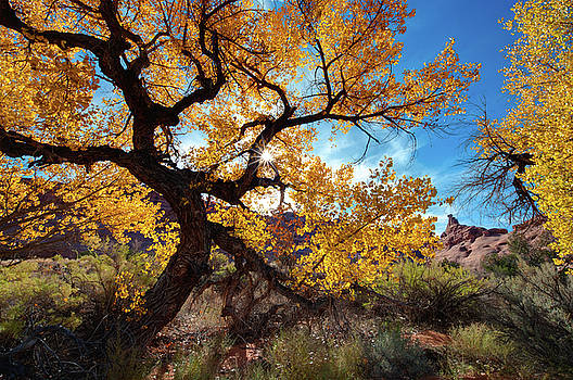 Fall Comes to Arches by Jeff Clay