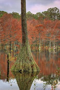 Fall Cypress by Greg Mills