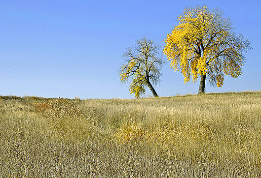 James Steele - Fall days in Fort Collins CO