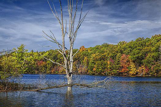 Randall Nyhof - Fall Dead Tree Stickup in Michigan Lake