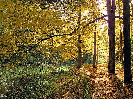 Fall by Deb Ingram