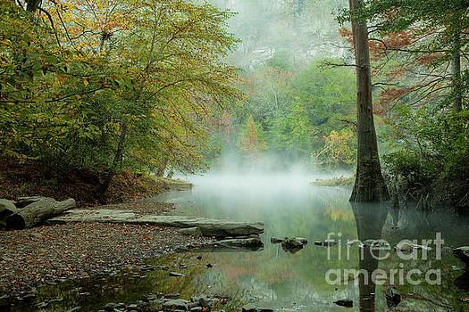 Fall Dreams by Iris Greenwell