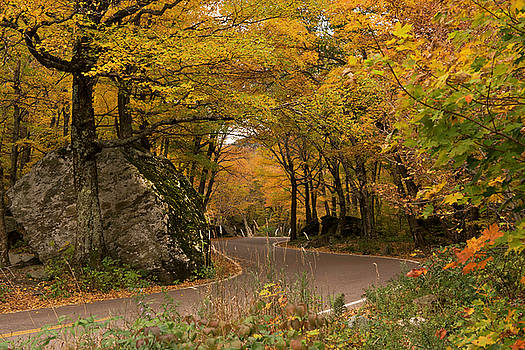 Fall Drive in Vermont by Donna Caplinger