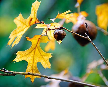 Fall Drops, Austin, Texas by Preston Broadfoot