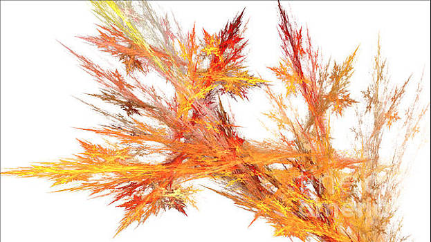 Fall    by Dwayne Jahn