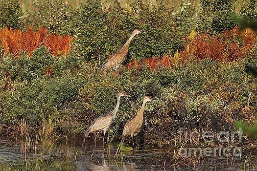 Fall Ferns and Sandhills by Teresa McGill