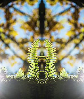 Pelo Blanco Photo - Fall Ferns Reflection