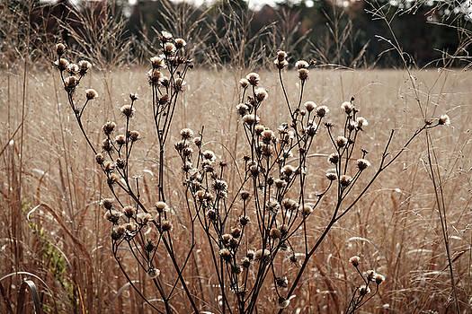 Fall Field by Glenn DiPaola