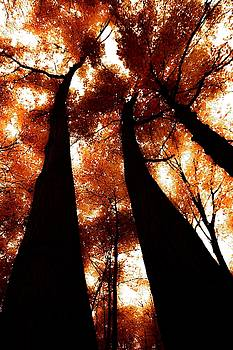 Autumn Canopy Abstract 2 by Karl Anderson