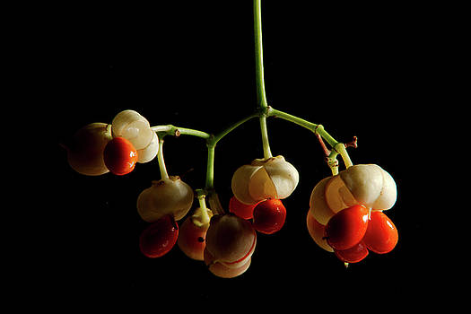 Fall Flowers and Pods - 1 by Larry Jost