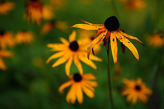 Fall Flowers in New Hampshire No. 1 by Lon Casler Bixby