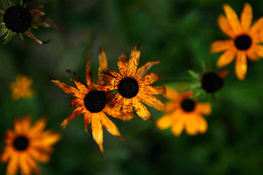 Fall Flowers in New Hampshire No. 2 by Lon Casler Bixby