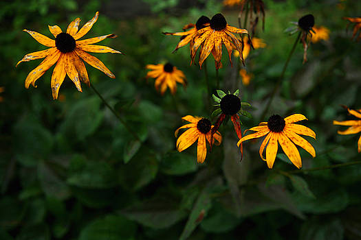Fall Flowers in New Hampshire No. 3 by Lon Casler Bixby
