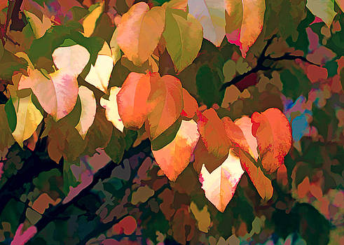 Fall Foliage by Beth Fox