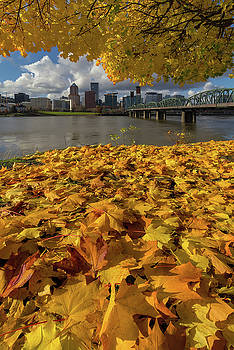 Fall Foliage in Portland Oregon City by David Gn