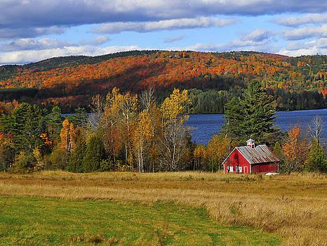 Fall Foliage by Mandy Wiltse