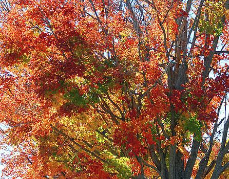 Fall foliage by Marilu Windvand