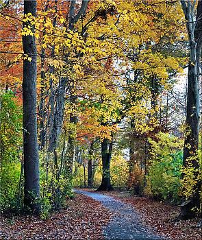 Fall foliage by Mikki Cucuzzo