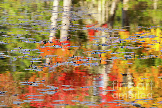 Fall Foliage Reflection by Denise Lilly