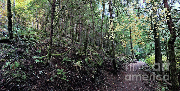Fall Forest 2 by Victor K