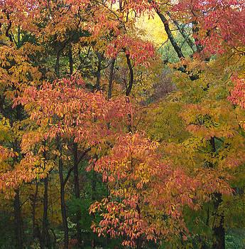 Fall Forest by Brenda Donko