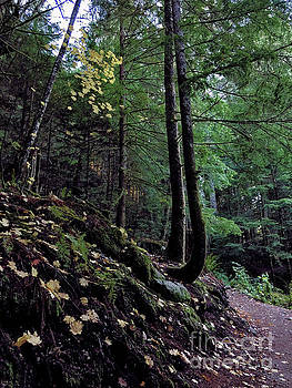 Fall Forest by Victor K