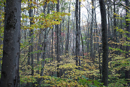 Fall Forest, Wilton NH by New England Photographic